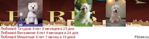 Вопросы разведения породных щенков вести и их реклама на породном форуме! - Страница 8 290510