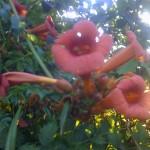 ~Floriiii~ - Page 5 21-02-06_2014-150x150