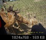 LJUBUŠKI-MK BIGRESTE 287A9A52-6731-504C-A3F9-AF82908DEDC7_thumb