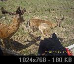 LJUBUŠKI-MK BIGRESTE 56124F11-3A84-1740-BF46-1EDAA55283A8_thumb