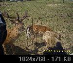 LJUBUŠKI-MK BIGRESTE D2E42F1D-3EBC-8449-AF1A-263A41F43C9D_thumb