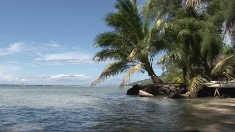 )))El color de la Naturaleza((( 764726738-exotique-paradis-plante-tropicale-arbre-tropical