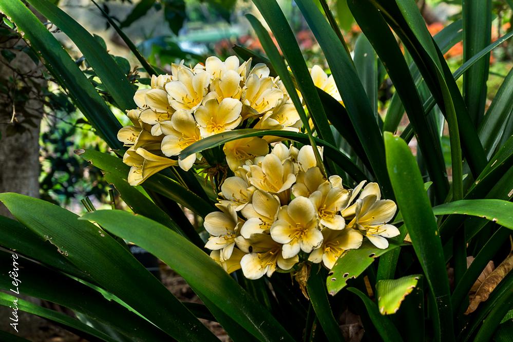 la fleur de Martin du 13 juin trouvée par Martine - Page 3 F4573c6aea6f71fc3323b5415641575c