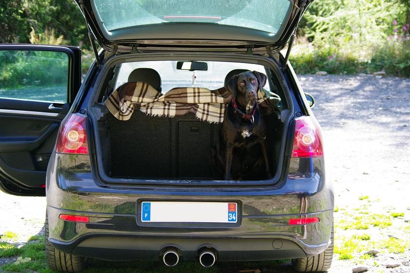 *** spécial *** photos de nos animaux *** - Page 4 IMGP6284_mini
