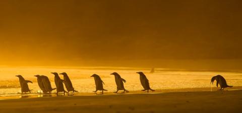 Лесные звери и птицы фото T933742