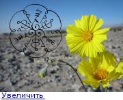 Ромашка Пустыни (привлечение клиентов,партнеров,морок и тд) 144477046246182226
