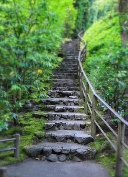 حدائق بورتلاند  اليابانية 108807971a4ba69603a861e2287b7d45
