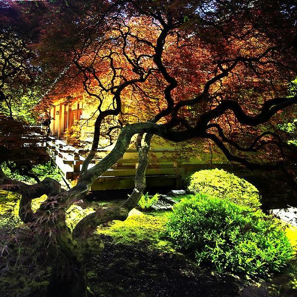 حدائق بورتلاند  اليابانية 14945a6d4a68bd035d2bd22213c6583f