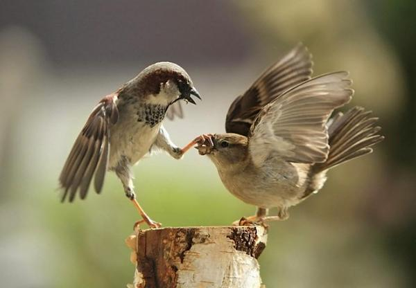 صور للطيور اتمنى تعجبكم  1ce70c4b1452c8d8152d3659263165c3