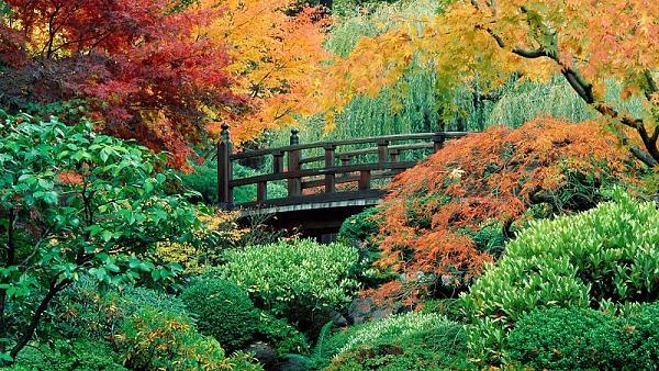 حدائق بورتلاند  اليابانية 387ac0a42544993e43cad3946d29b159
