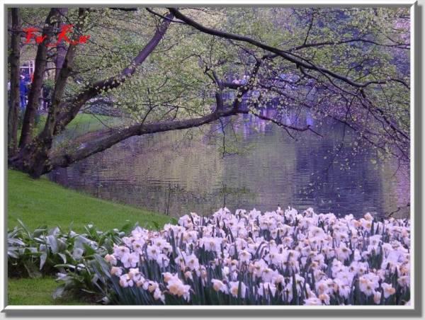 صور ورود صور بحيرات صور 2012 الطبيعة الخلابة وابداع الخالق سبحانه 4306615391d64ce0996edee9e19cdac8