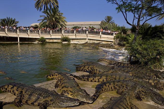 حديقة تماسيح على البحر البيض المتوسط 4741d693a91d6a9bfa8f755c9f632535