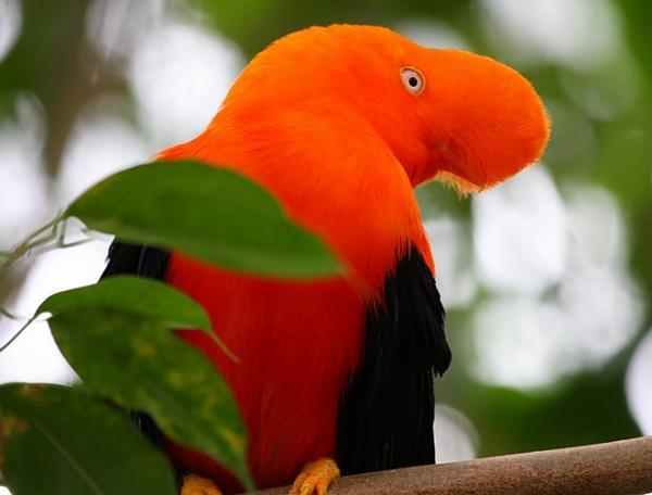 صور للطيور اتمنى تعجبكم  6f4d1fdc455d62330c5b5dadf78565ae