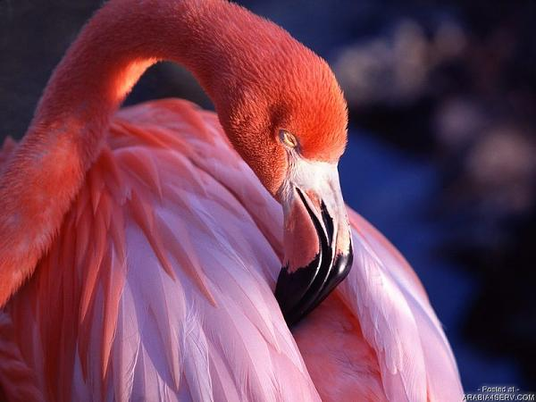 طيور ملونة جميلة 6fd252f01a73436bf3c5f4966ce64926