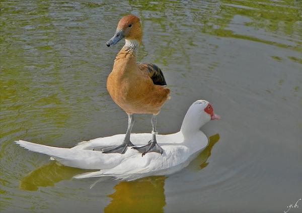 صور للطيور اتمنى تعجبكم  757923ab3aed922636fe25286102591d