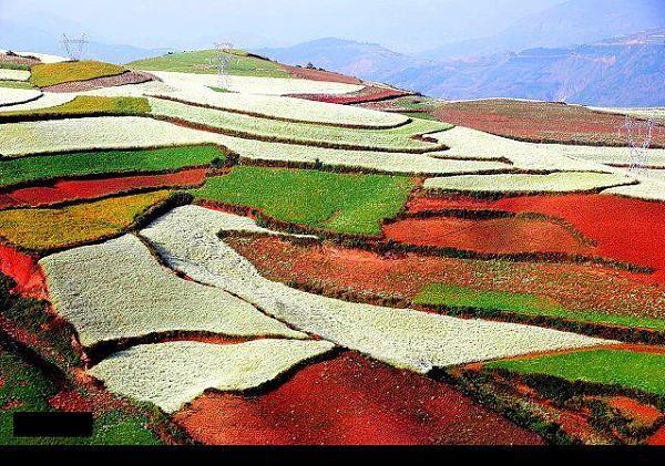 حقول زراعيه في الصين 94baccc9e2a56a5b2f9165aec0738bae