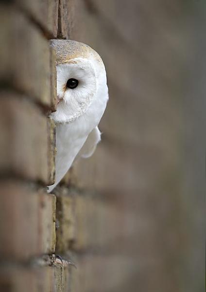 صور للطيور اتمنى تعجبكم  9fcaf4c0b54ca7e00062b2c8dbeba5fb