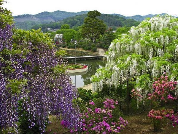 """شلالات الورود في """"اليابان"""" B87ecd6e8c3c45204720e473b9a5a6b3"""