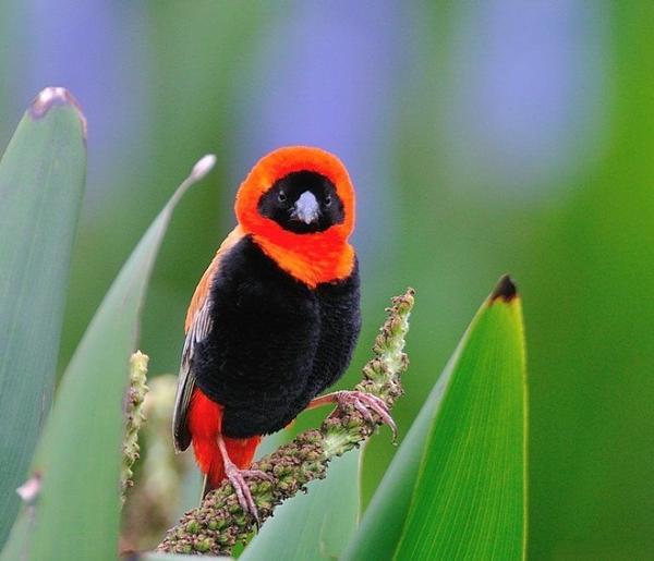 صور للطيور اتمنى تعجبكم  Bb9ce1e46c8ed86657673f8c158ec5ed