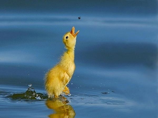 صور للطيور اتمنى تعجبكم  Bccadafb61f6b339cf66ac0505712ba9