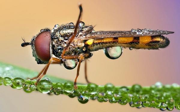 حشرات وكأنها مرصعة بالالمـ'ـاس C04ce36711a891f4892c3432a0e1a324