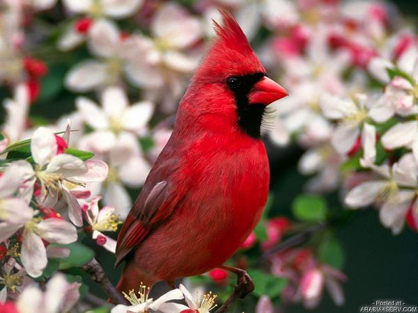طيور ملونة جميلة C5b9728af4873afd2f115da51a146480