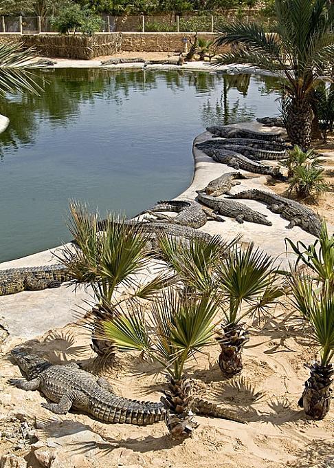 حديقة تماسيح على البحر البيض المتوسط C74268ce1302c89efc06207929d5f581