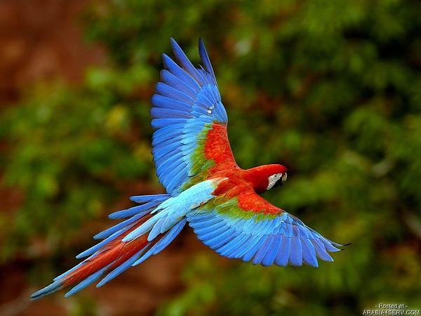 طيور ملونة جميلة D0ec90079449f5a85db9459a17ec5ffb