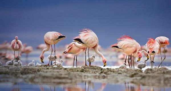 صور للطيور اتمنى تعجبكم  D5a02d0d8e45b43db0ae74606734a775