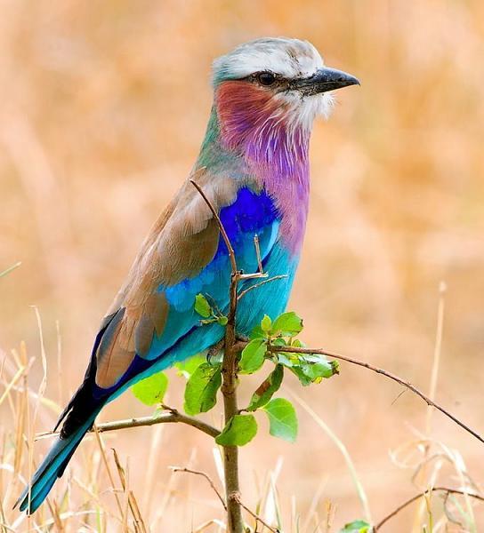 طيور ملونة جميلة Df44a236226643051733b66df5dd55bb