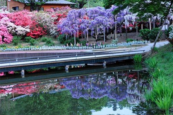 """شلالات الورود في """"اليابان"""" E3ecdf295f871da32e72ae57a65180c1"""