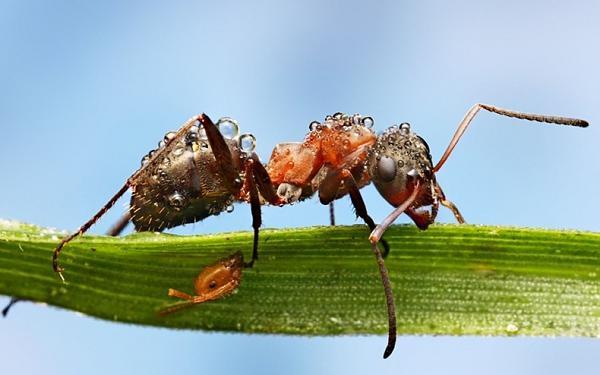حشرات وكأنها مرصعة بالالمـ'ـاس E5b89a889b4a49e72702773bda0b9b48