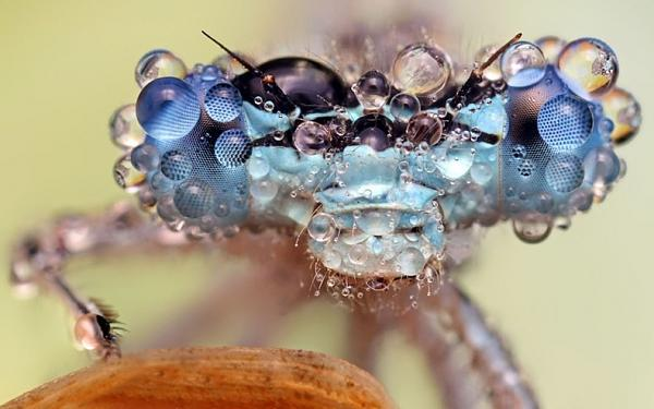 حشرات وكأنها مرصعة بالالمـ'ـاس E61db401bc50e78ca9eb52c78beae2b7