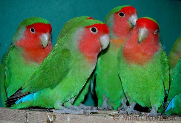 طيور ملونة جميلة F23e375bc2a002515c8f8c71febd2341
