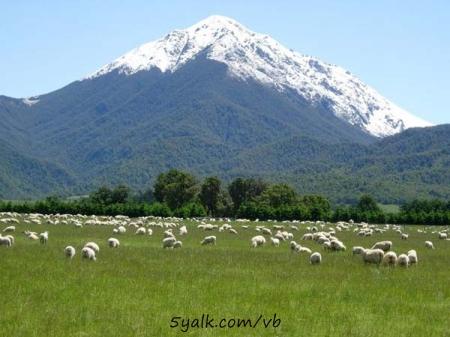 رحلة ع نيوزلندا مع فوفو 265416_21223756051