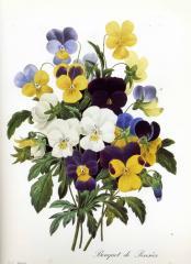 Прекрасные старинные цветы. Ботанический атлас Пьера Редуте 1133-3