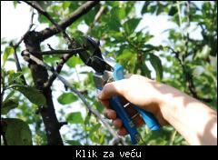 Profesionalno orezivanje i zastita vinove loze,voca i ruza povoljno! 1_tmb_207765994_01%20C2_2