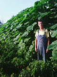 Prodajem sadnice paulovnije 1_tmb_65708324_01