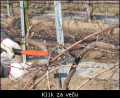 Profesionalno orezivanje i zastita vinove loze,voca i ruza povoljno! 1_tmb_66107367_03%20rezidba-vinograd-gt5