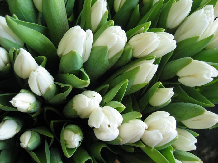Фанфики KatherineRU Flowers007