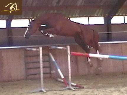 Death_on_horse parduodami zirgai Volturnobsite