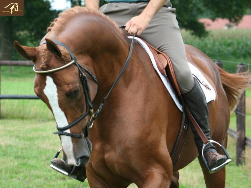 Death_on_horse parduodami zirgai Volturnodsiterechtsonder