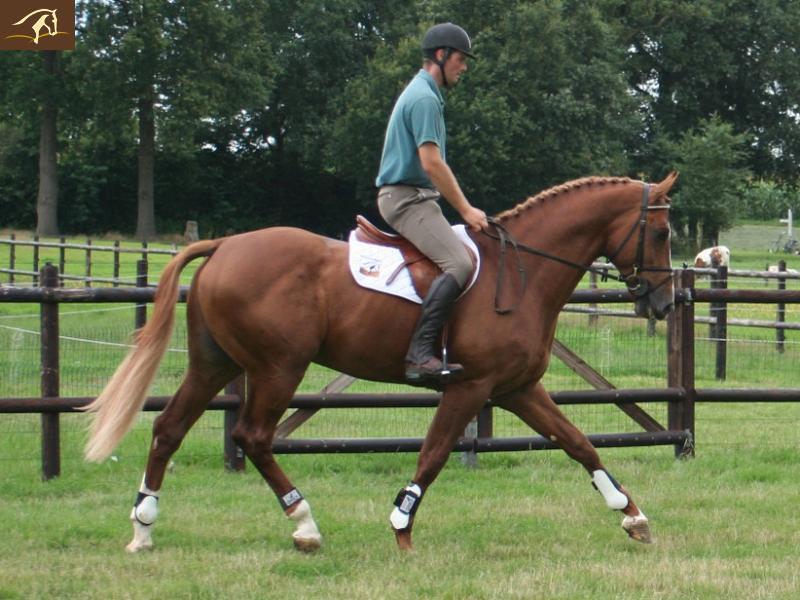 Death_on_horse parduodami zirgai Volturnoscitedraf