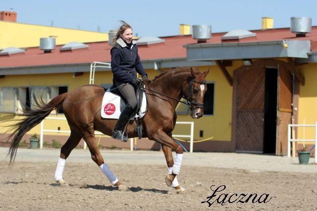 Žirgų veisykla pas Mon Amuške Laczna4_05d0e
