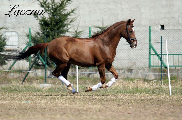 Žirgų veisykla pas Mon Amuške Laczna5_d4b9b