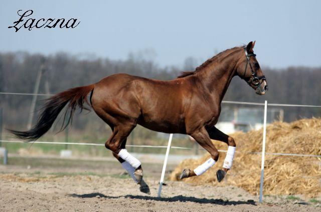 Žirgų veisykla pas Mon Amuške Laczna6_1be8f