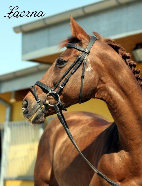 Žirgų veisykla pas Mon Amuške Laczna9_dc283