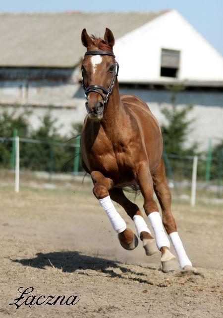Žirgų veisykla pas Mon Amuške Laczna_8