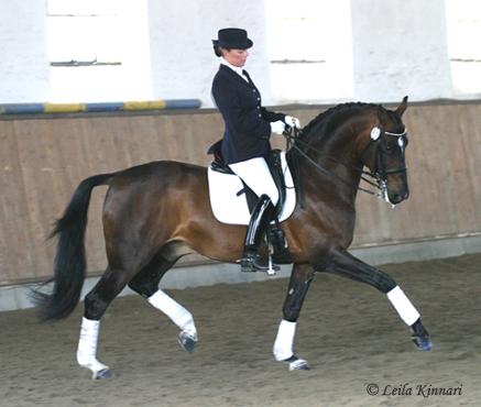 Išjodinėjimo treniruotės pas Mon Amie Dressage_horse_blog1