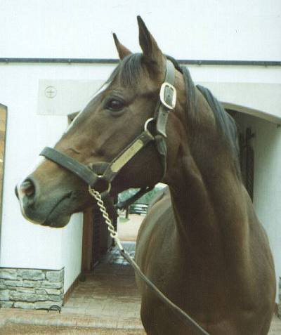 Barbaro (sav. žirgynas) Exceller-full